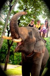 A raised elephants trunk is good luck.