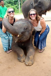 The younger elephants were so fun and very friendly!