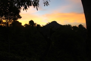 Sunrise over the tea plantations in Ella